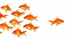 золотые рыбки и одна в стороне